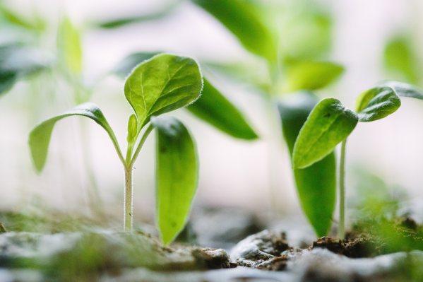 PlantingSeeds.jpeg
